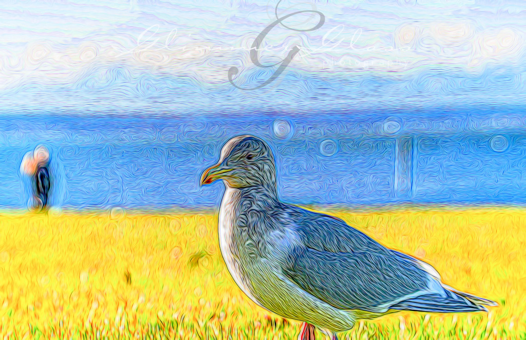 """Seagull at Marina Beach in Edmonds. Filtered with """"Squiggle Lines"""" and saturated in Lightroom to look like a VanGogh painting."""